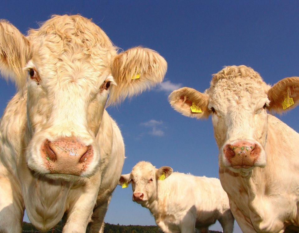 Fermieri, ferme, ferma, Romania